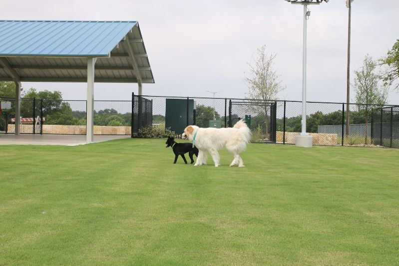 Dogs playing in Garland Dog Park